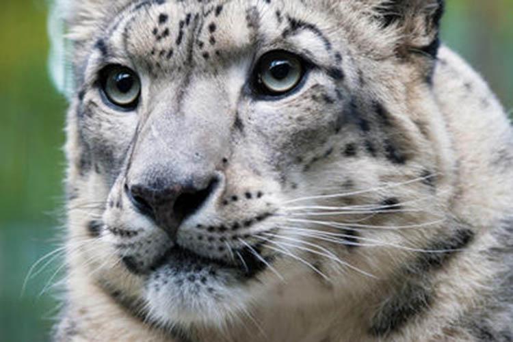 Conheça o zoológico que inspirou o desenho do Madagascar